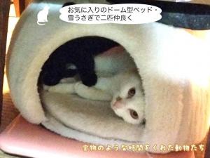 お気に入りのドーム型ベッド・雪うさぎで二匹仲良く