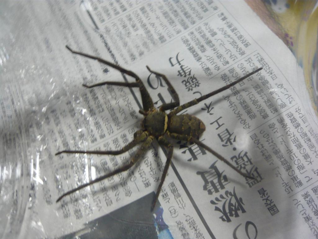 一 でかい 蜘蛛 世界