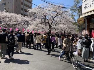 目黒川桜まつり_02