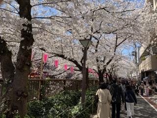 目黒川桜まつり_05