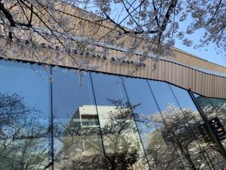 目黒川桜まつり_08