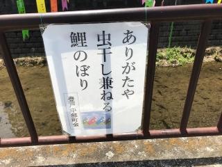 2019_鯉のぼり_04