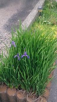 flowers@201905270001.jpg