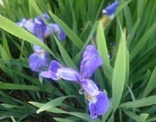 flowers@201905270002.jpg