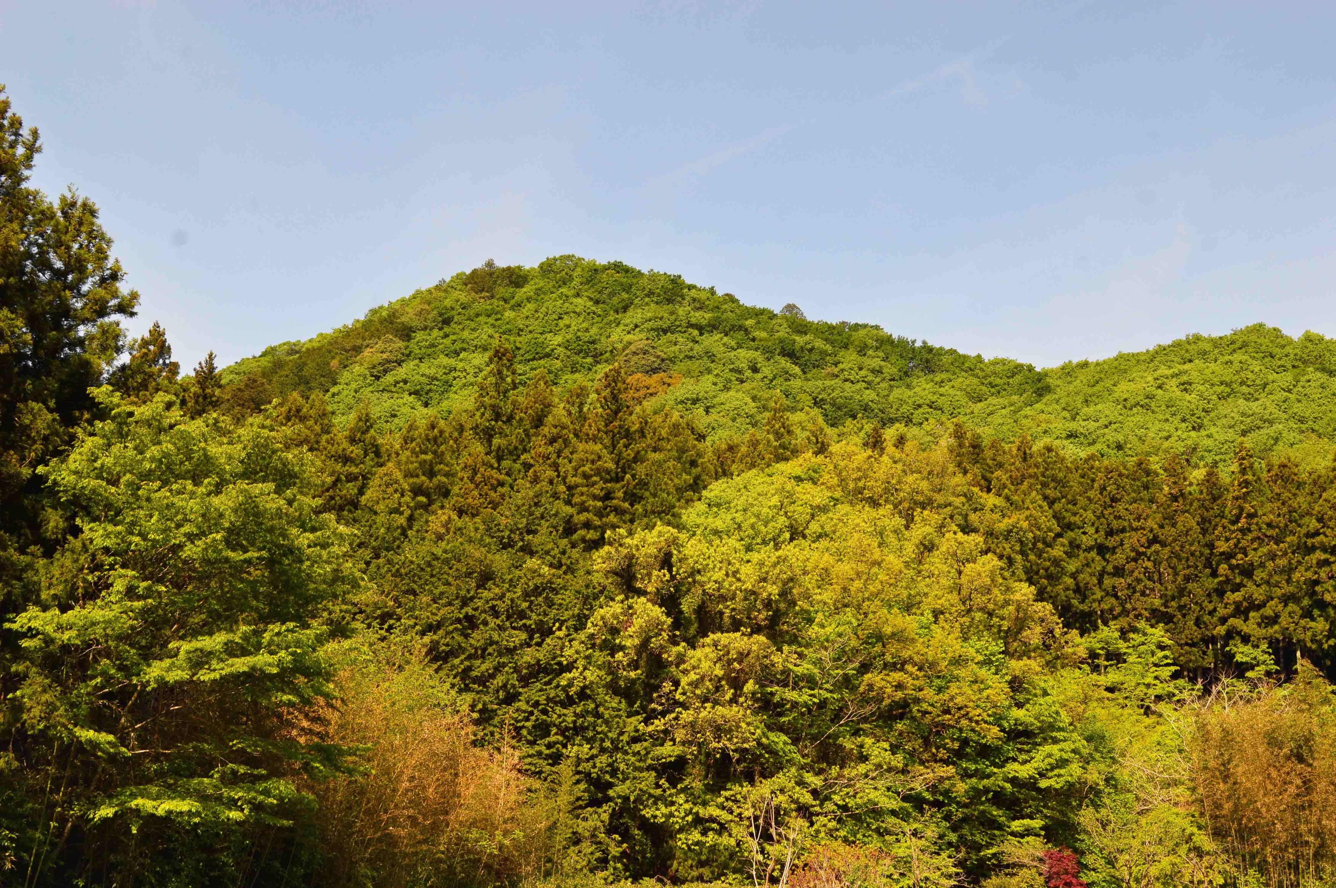 浅利城 遠景