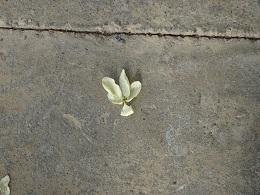 落ちた花びら