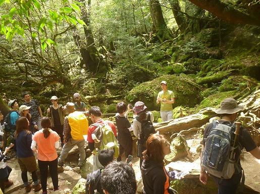 登山者で賑わう苔むす森5月4日