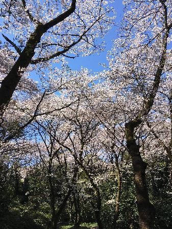 2019花見_01