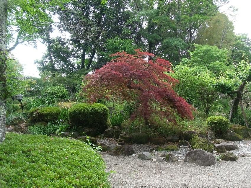 茶花の庭の主人公