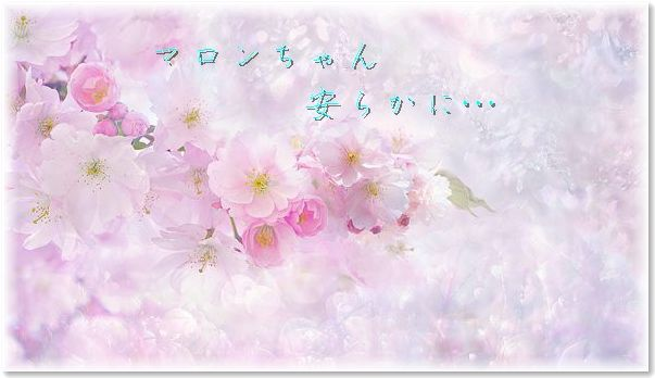 01-マロンちゃん安らかに190409-2241