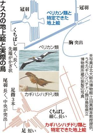 ナスカの地上絵と実際の鳥=共同