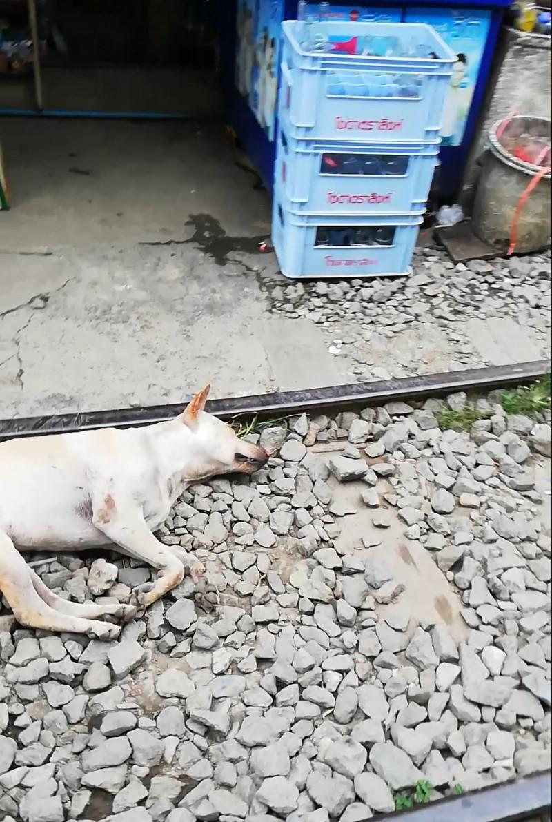 タイお正月_190525_0016
