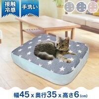 7145911_cat.jpg